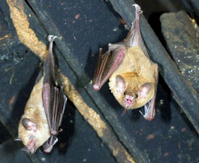 Bat Waste Cleanup