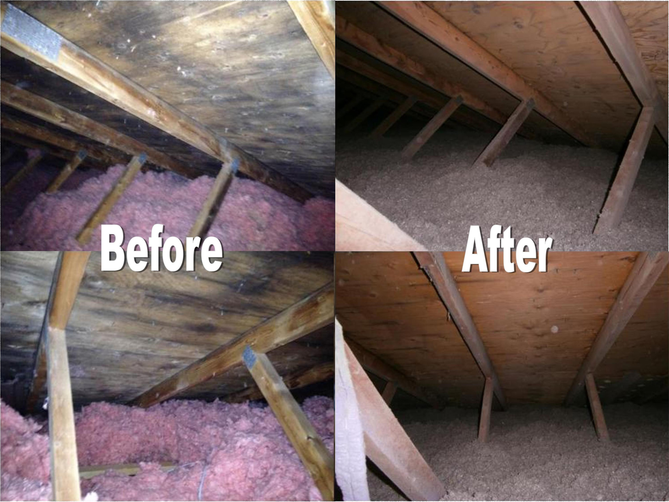 Before and After Mold Removal